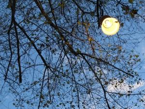 29 LAMPIONE TRA I RAMI  AZZURRO PODIO IMG 0317