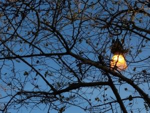 NATURAC LAMPIONI IMG 2119