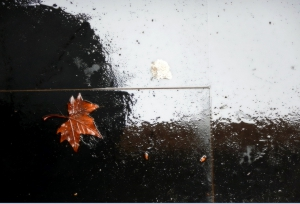 PR BLOG IN 26 la foglia dispersa  autunno posta podio dscn6238-001